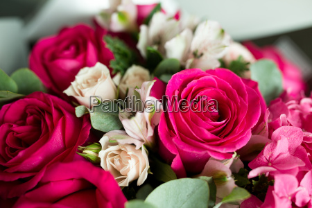 weiche farbe roses