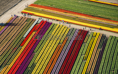 aerial view of rows of colorful