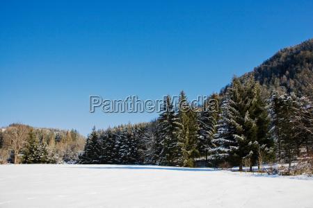 snow and fir trees in flachau