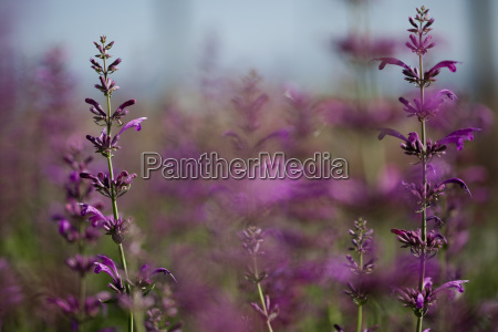 close up von pflanzen mit lila