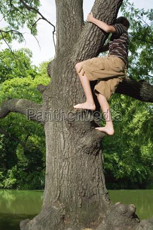 teenage boy climbing a tree