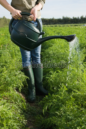 woman watering crop in field with