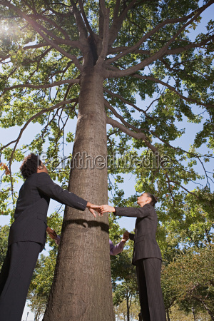 businesspeople holding hands around a tree