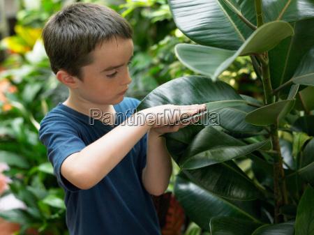 boy touching a large plant