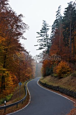 country road through forest near frankfurt