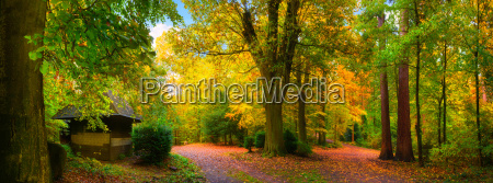 picturesque colorful autumn in a beautiful