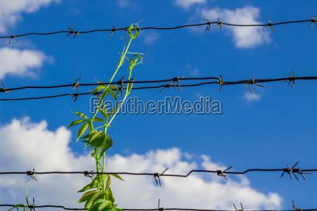 sprout eroberungen arbed draht