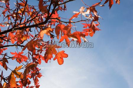 autumn leaves on tree