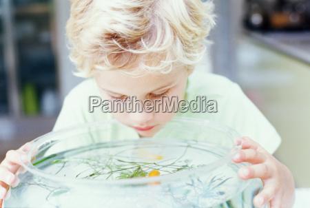 boy looking into fish bowl