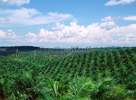 horizont wolke malaysia niemand regenwald natur