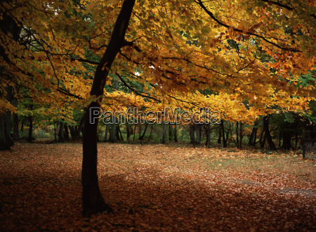 english forest in autumn
