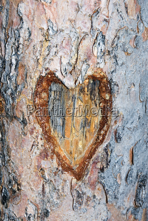 heart carved in a tree trunk