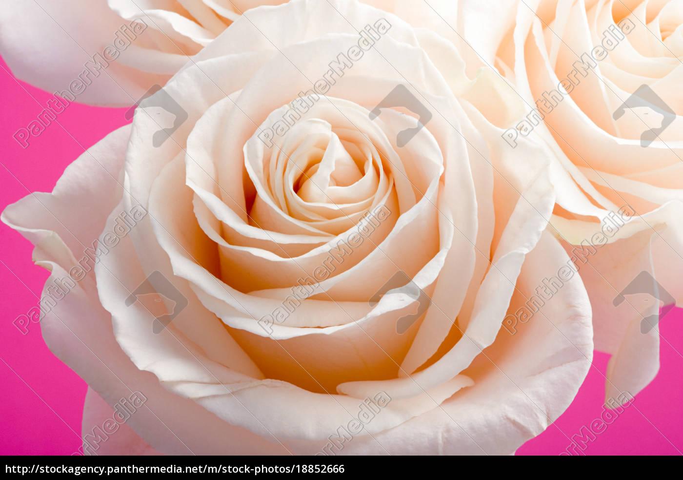 rosen - 18852666