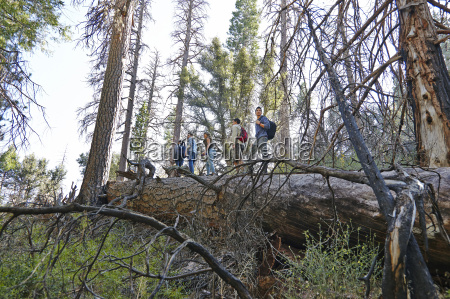 five young adult friends hiking on