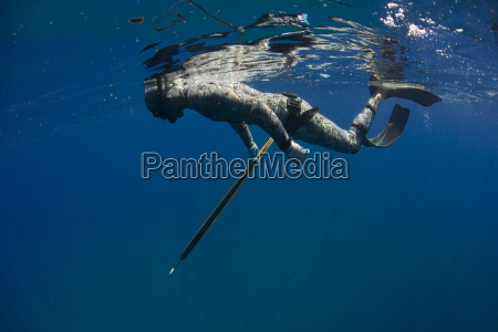 underwater side view of spearfisher preparing