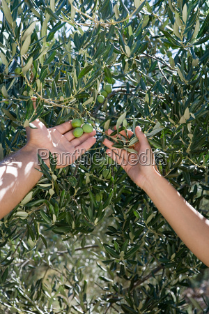 people holding olives