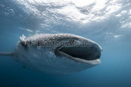 blau sonnenlicht vorderansicht harmonie badespass haifisch