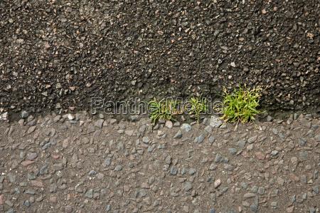 grass growing in asphalt