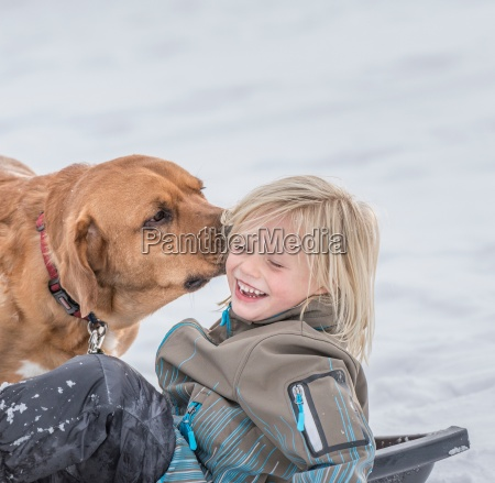pet dog licking boys ear in