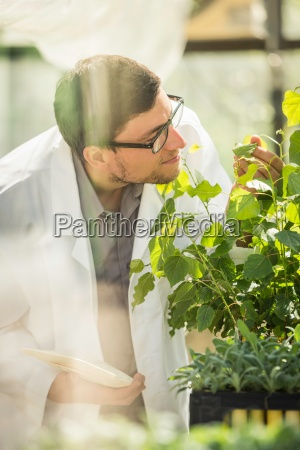 scientist examining plant in plant growth