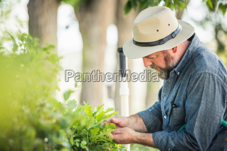 scientist examining plants at plant growth