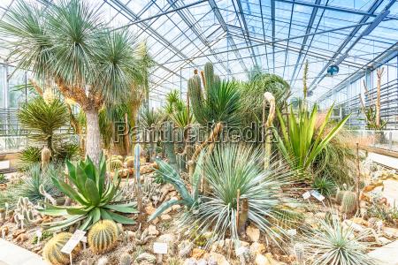 palmen im gewaechshaus