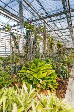 viele gruene pflanzen
