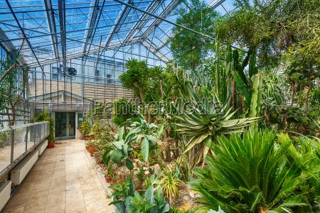 tropische pflanzen im gewaechshaus