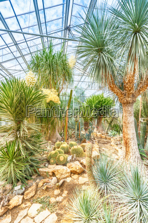 exotische pflanzen