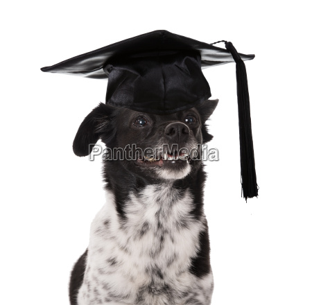 graduated dog wearing mortar board