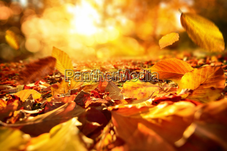 atmospheric scene in autumn with falling