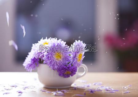 schoene lila aster blumen und fallende