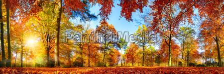 panorama of colorful trees in bright