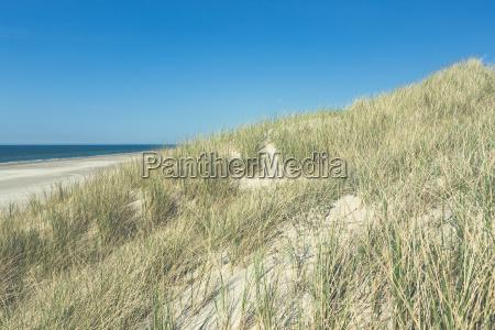 duenen mit strand vor blauem himmel