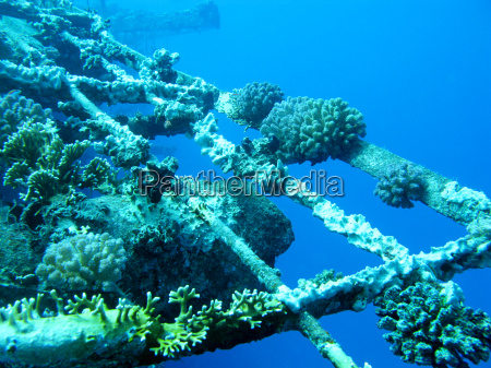 blau unterwasser landschaftsbild landschaft natur kunstspringen