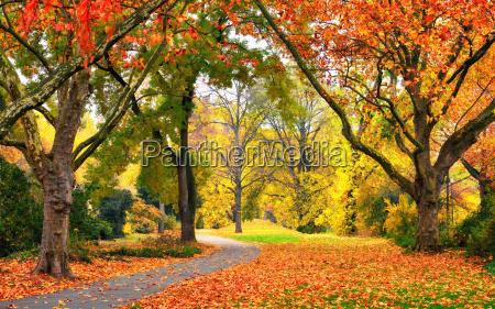 park in autumn in friendly warm