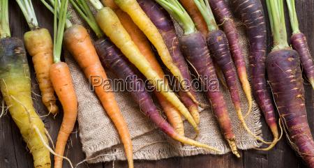 frische organische regenbogen karotten