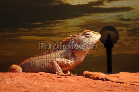 tier reptil abend lebewesen daemmern wildlife