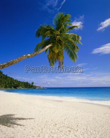 palme und strandseychellen