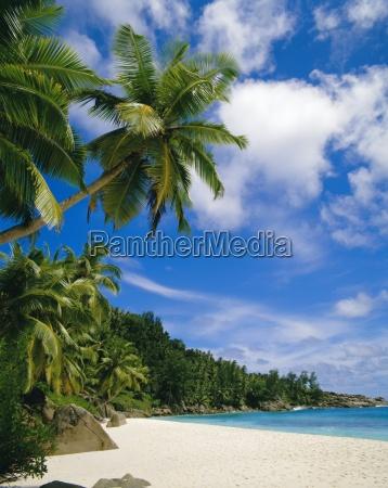 palmen und strandseychellen
