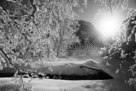 baum baeume winter botanik europa schweiz