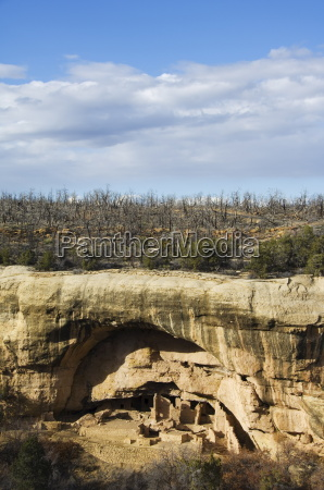 cliff palace ruins in mesa verde