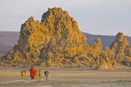 beduinen bringen ihre esel nach hause