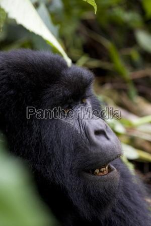 fahrt reisen afrika tiere outdoor freiluft
