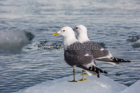 fahrt reisen farbe vogel horizontal gefroren
