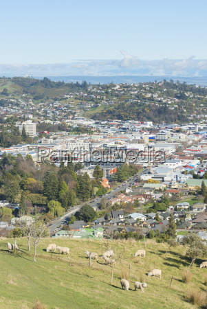 aerial view of nelson south island