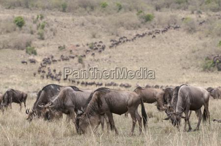 fahrt reisen farbe saeugetier afrika kenia