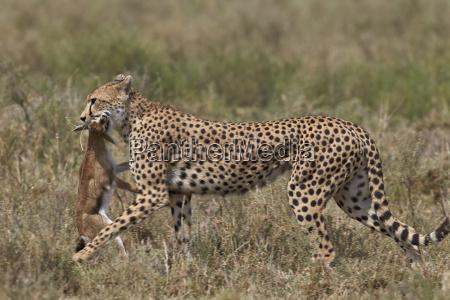 fahrt reisen farbe tier saeugetier fauna