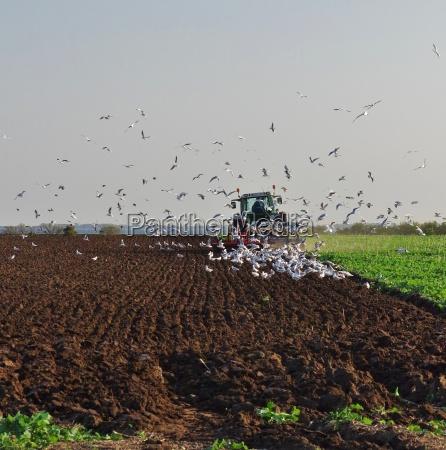 pfluegender landwirt umkreist von nahrung suchenden