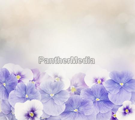 violet flowers background